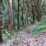 Beautiful Oak forest trail towards Ghandruk on Annapurna Poonhill Trek