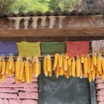 Maize hung for drying from the rooftop on the Annapurna Base Camp trail