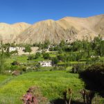 Lush farm fields in Sham Valley on Ladakh-Bike,Hike,Raft trip by Adventure Sindbad