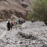 Camping equiment is carried by horses and mules on the Markha Valley Trek in Ladakh by Adventure Sindbad