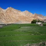 Farm fields at Markha Village in Ladakh