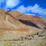 Shepherds-Snui-Sumdo-Nubra-Valley-Trek-Adventure-Sindbad