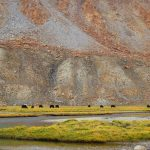 Grazing-grounds-Nubra-Valley-Trek-Adventure-Sindbad