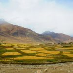 Fields-Nubra-Valley-Adventure Sindbad