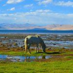 parangla-trek-spiti-tsomoriri-ladakh-adventure-sindbad-005