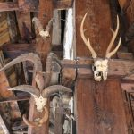Skulls of ibex, blue sheep & sambar at Hadimba temple on Spiti Village Walks trip by Adventure Sindbad