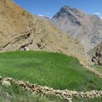 Demul Farm fields on Spiti Village Walks trip by Adventure Sindbad