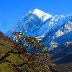 Mt. Pandim on the Dzongri Goechala trek in SIkkim