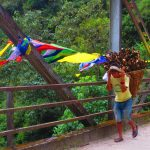Fluttering prayer flags and powerful porters - unforgettable sights on the dzongri - Goechala Trek in Sikkim