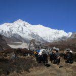 Dzos-Yaks-Dzongri-Goechala-Sikkim-Adventure-Sindbad