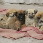 Puppies-in-a-Huddle -Markha-Winter-Walk-Adventure-Sindbad
