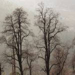 Leafless-Trees-Manali-Adventure-Sindbad