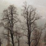 Leafless-Trees-Manali-Adventure-Sindbad