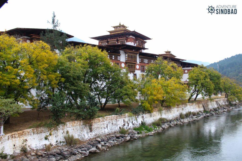 Punakha-Dzong-jacaranda-trees-walkway-Bhutan-Himalaya-Adventure-Sindbad-Vishwas-Raj-12