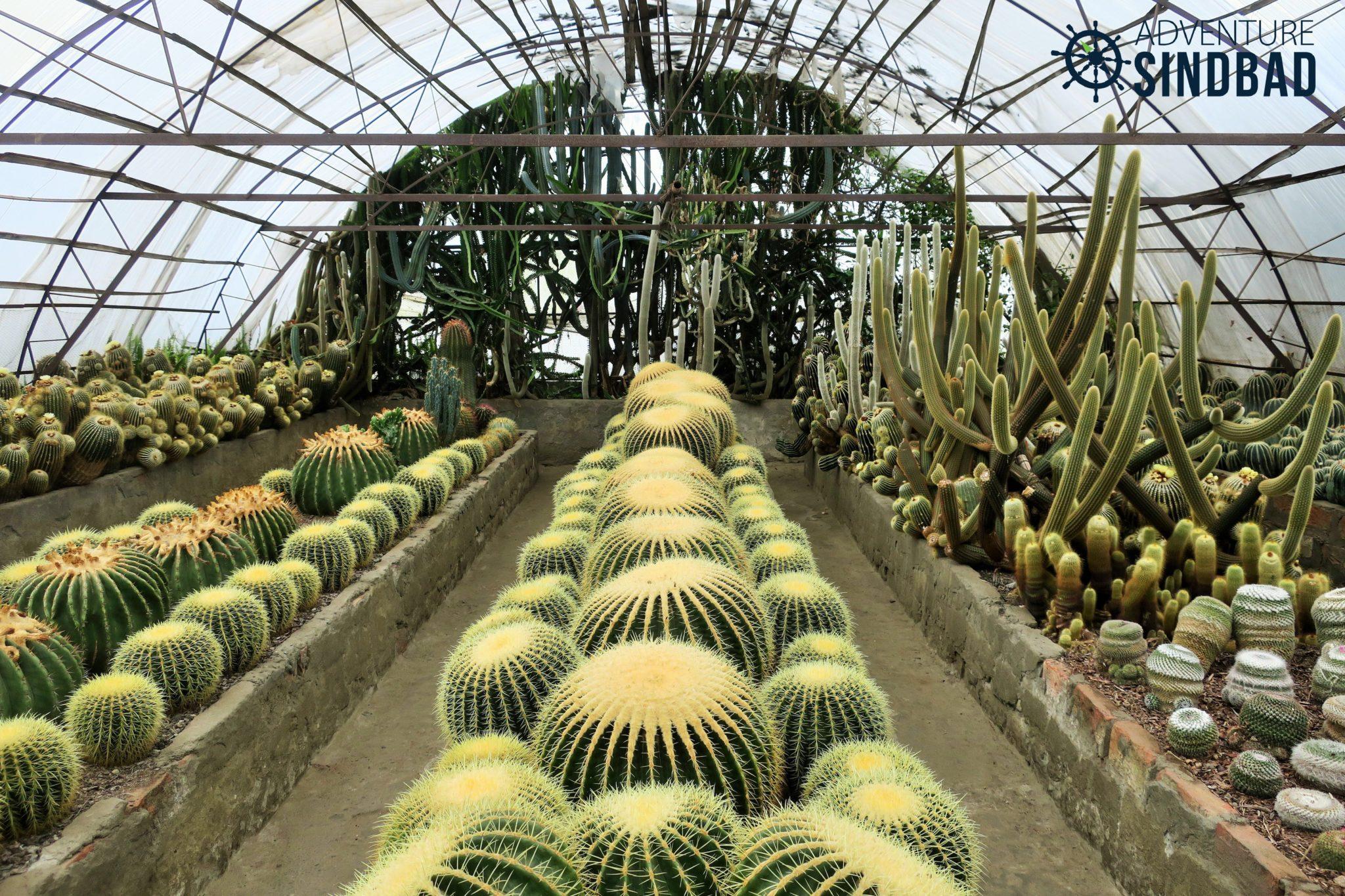 Cacti-Nursery-Kalimpong-Adventure-Sindbad