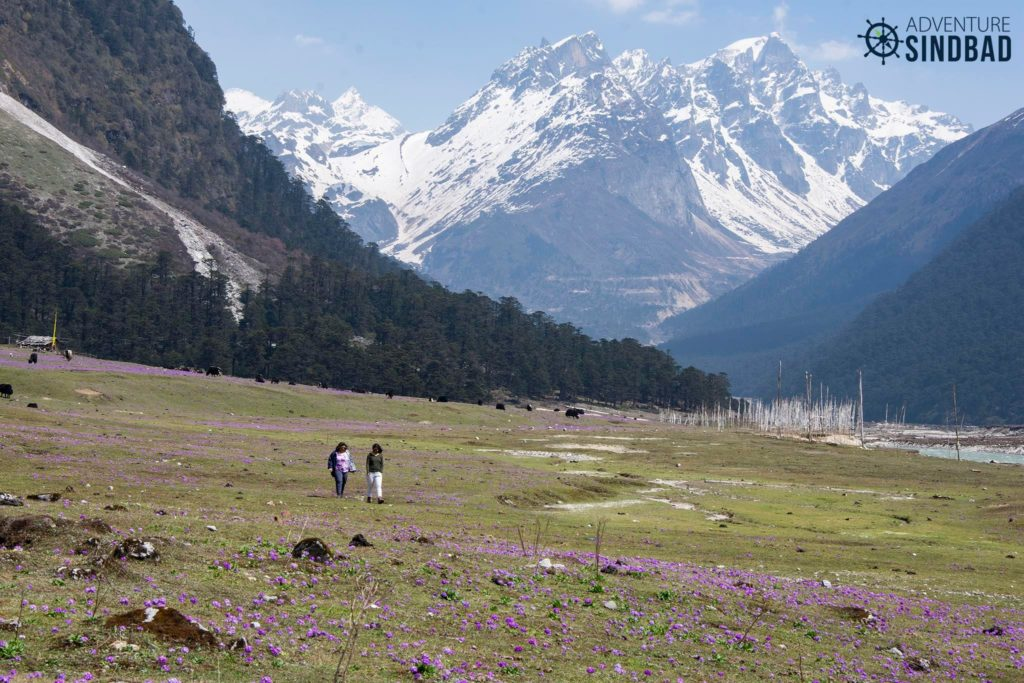 Yumthang-Valley-North-Sikkim